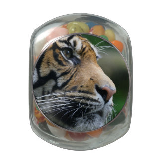 Gorgeous Bengal Tiger Face Jelly Belly Candy Jars