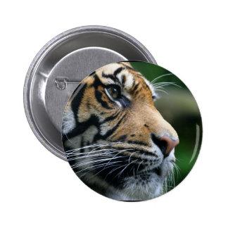 Gorgeous Bengal Tiger Face Pinback Button