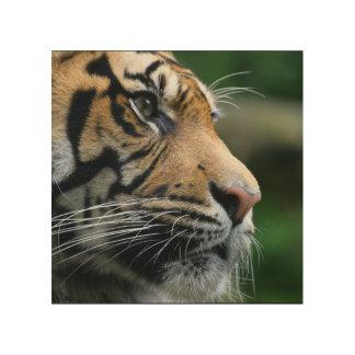 Gorgeous Bengal Tiger Face Wood Wall Art