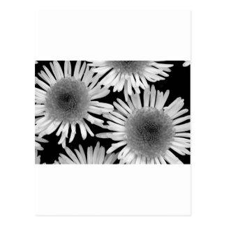 Gorgeous black and white dahlia print card postcard