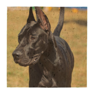 Gorgeous Black Great Dane Coasters