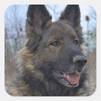 Gorgeous Black-saddled German Shepherd Stickers