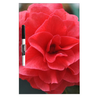 Gorgeous Blooming Red Camellia Mother's Day Dry Erase Board