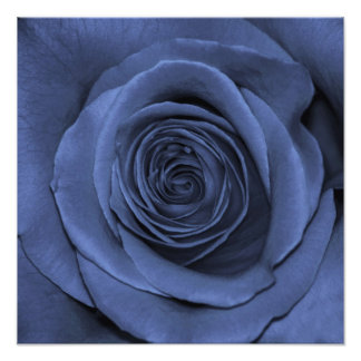 Gorgeous Blue Colored Rose Photo Print