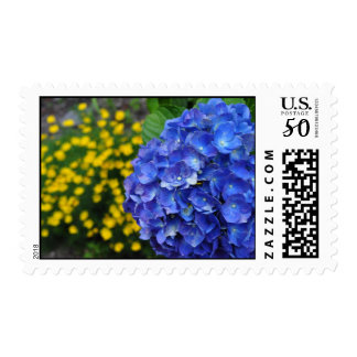 Gorgeous Blue Hydrangea Offset by Yellow Postage