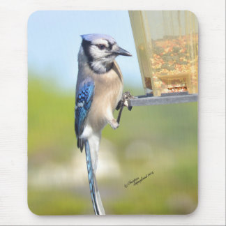 Gorgeous Blue Jay bird Mousepad