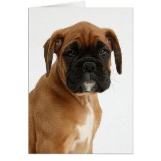 Gorgeous Boxer Puppy Card