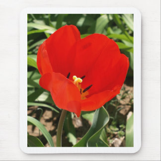 Gorgeous Bright Red Tulip photo Mouse Pad