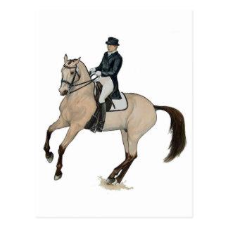 Gorgeous Buckskin Dressage Horse Art Postcard