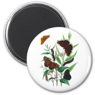 Gorgeous Butterflies 2 Inch Round Magnet