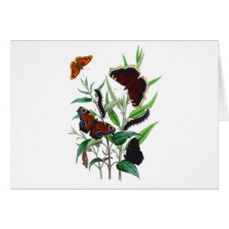 Gorgeous Butterflies Card