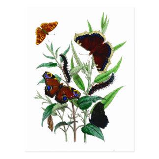 Gorgeous Butterflies Postcard