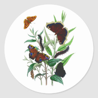 Gorgeous Butterflies Round Stickers