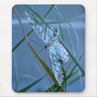 Gorgeous Butterfly ~ macro photography mouse pad