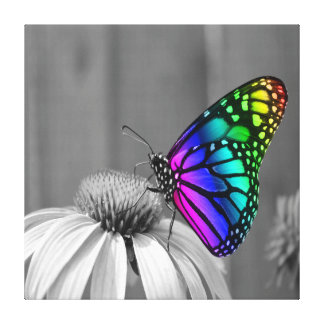 Gorgeous Butterfly On Flower Wrapped Canvas