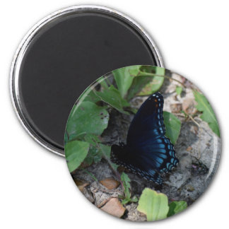 Gorgeous Butterfly Photograph Magnet