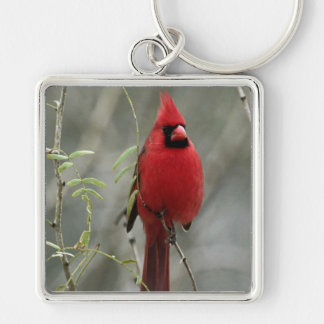 Gorgeous Cardinal Photo-  Keychain