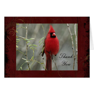 Gorgeous Cardinal Photo- Thank You Note Card