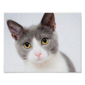 Gorgeous Cat Poster