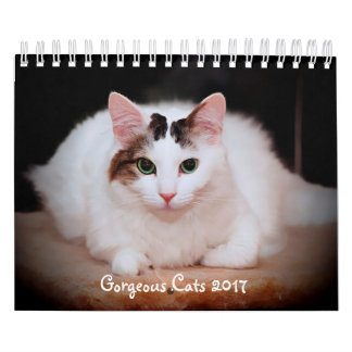 GORGEOUS CATS 2017 CALENDAR