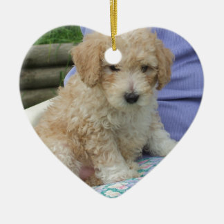 Gorgeous cavapoo puppy looking your way, isolated ceramic ornament