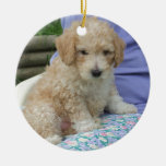 Gorgeous cavapoo puppy looking your way, isolated Double-Sided ceramic round christmas ornament