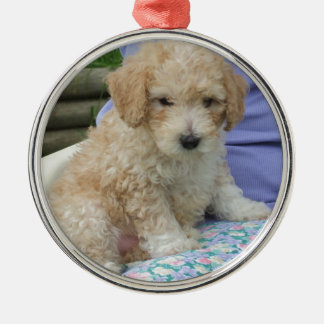 Gorgeous cavapoo puppy looking your way, isolated metal ornament