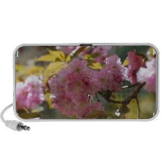 Gorgeous Cherry Blossoms Portable Speaker