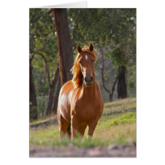 Gorgeous Chestnut Brown Horse in Field Card