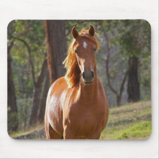 Gorgeous Chestnut Brown Horse in Field Mousepad