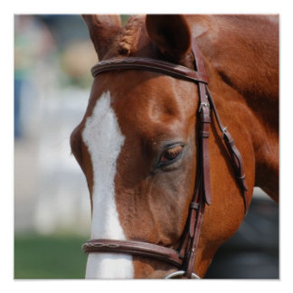 Gorgeous Chestnut Show Horse Poster