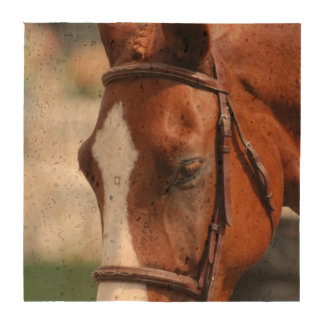 Gorgeous Chestnut Show Horse Beverage Coasters