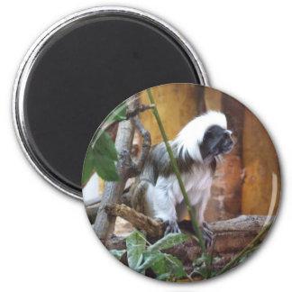 Gorgeous Colobus Fridge Magnet