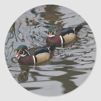 Gorgeous Colorful Wood Ducks In Pond Photograph Classic Round Sticker