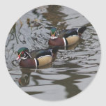 Gorgeous Colorful Wood Ducks In Pond Photograph Round Stickers