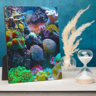 Gorgeous Coral Reef Plaques