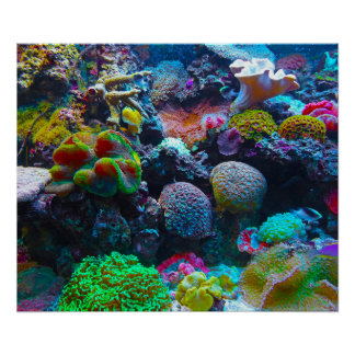 Gorgeous Coral Reef Poster