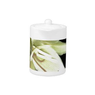 Gorgeous Crinum Lily