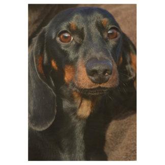 Gorgeous dachshund animal portrait wood poster