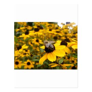 GORGEOUS DAISY FIELDS HONEY BEE POST CARD