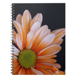 Gorgeous daisy flower - macro view notebook