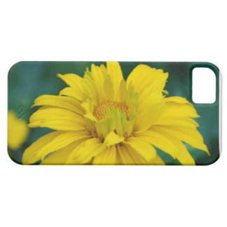 Gorgeous False Sunflower iPhone 5 Cases
