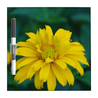 Gorgeous False Sunflower Dry-Erase Boards