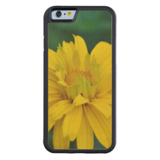 Gorgeous False Sunflower Carved® Maple iPhone 6 Bumper