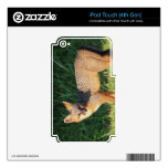 Gorgeous Fox iPod Touch 4G Decal