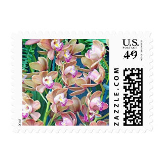 Gorgeous Fresh Pink Tan Slipper Orchids Postage