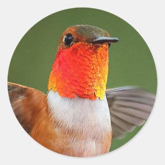 Gorgeous Gorget-Flashing Rufous Hummingbird Classic Round Sticker