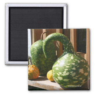 Gorgeous Gourds Nature Photo Magnet