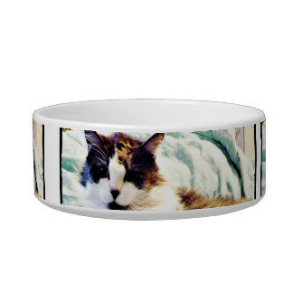 Gorgeous gray and white fluffy cat pet food bowl