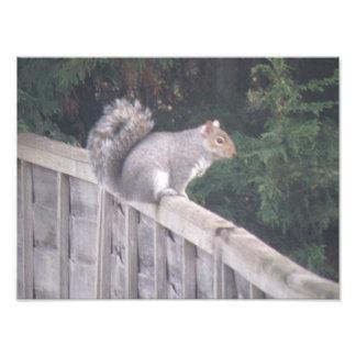 Gorgeous Gray Squirrel Photo print
